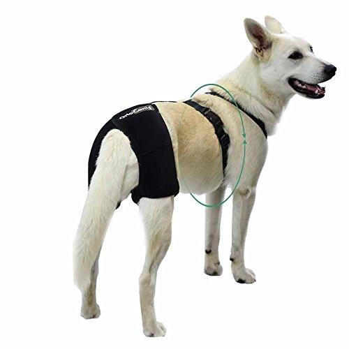 Ortocanis Soporte de Cadera Perros con displasia de Cadera o artrosis - Talla L