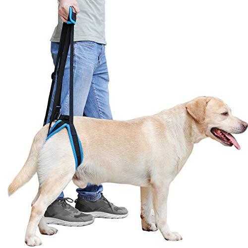 Arnés de elevación para perros, ayuda a elevar la parte posterior del perro, soporte para perros...