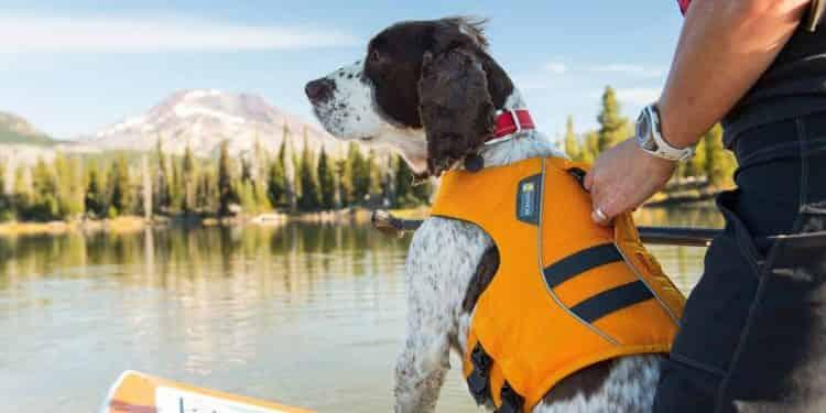 Chalecos salvavidas perro webp