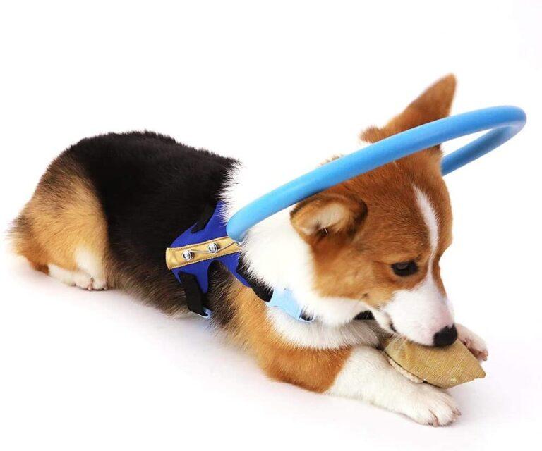 Arnes perros ciegos