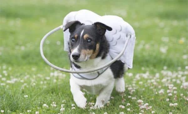 Cómo cuidar a un perro ciego