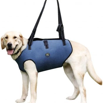 Arnés para perros con displasia