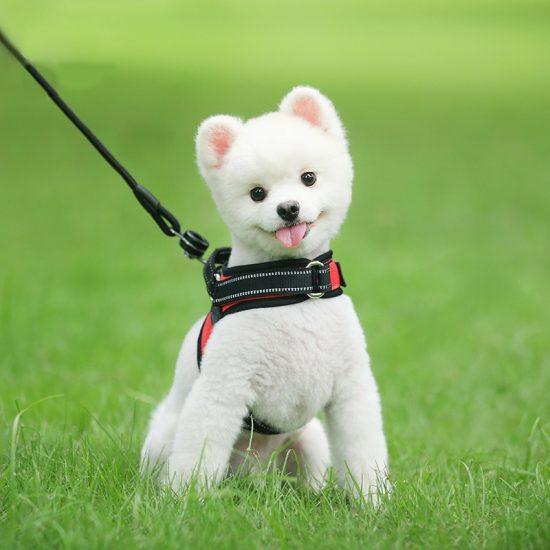 Arneses para perros pequeños
