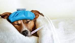 Enfermedades perro