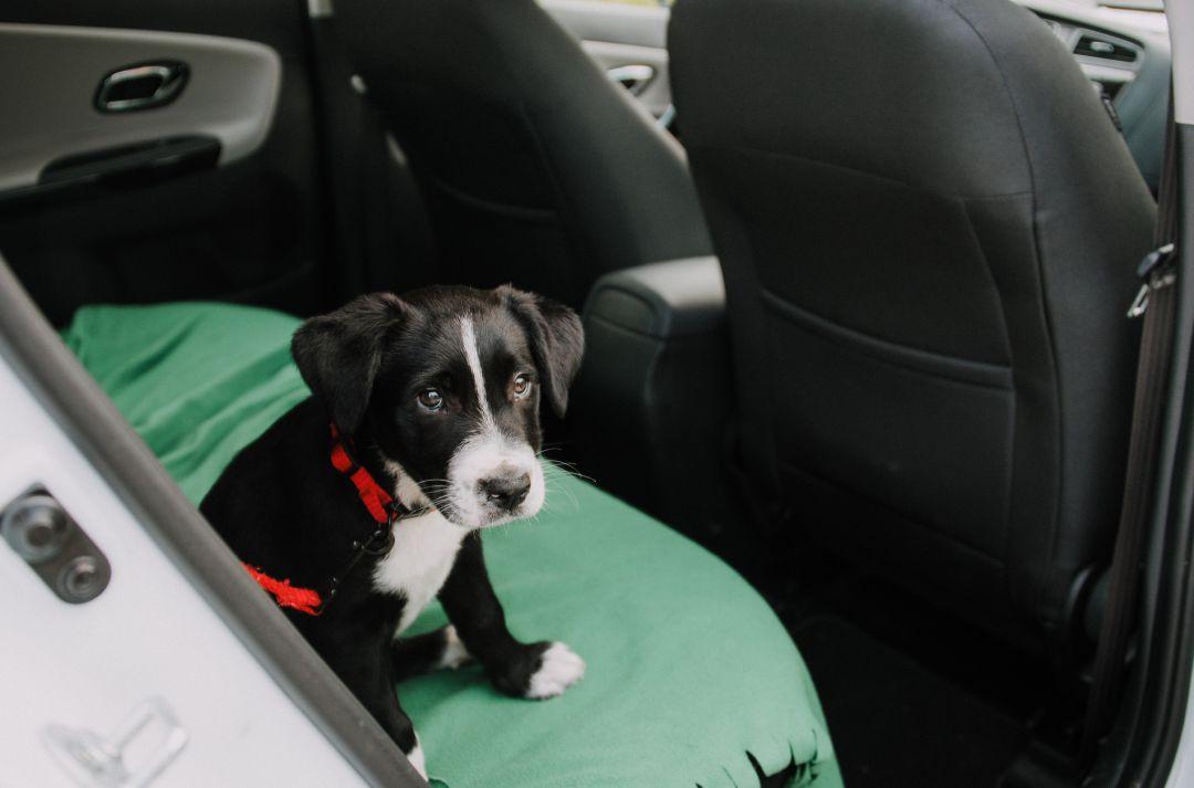 mascota dentro de un coche al sol