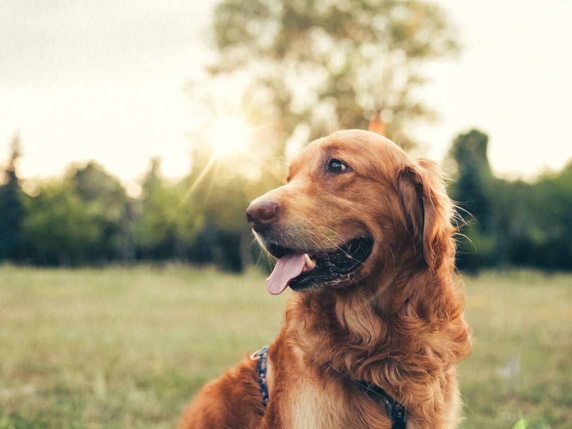 enfermedades perro verano