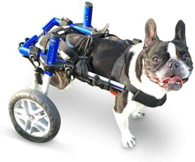 Silla de ruedas perro